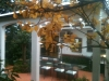 white verandah
